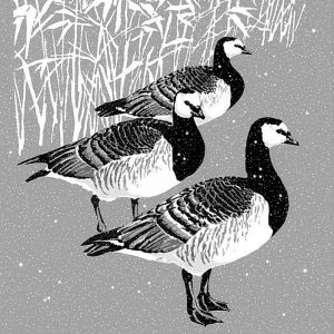 Barnacle Geese Christmas Cards