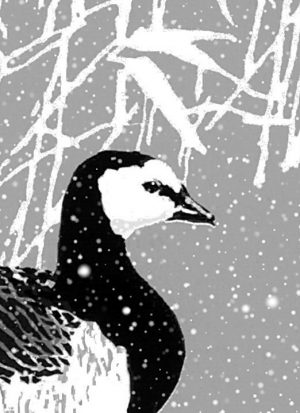 Barnacle Geese Christmas Cards - 80x112mm