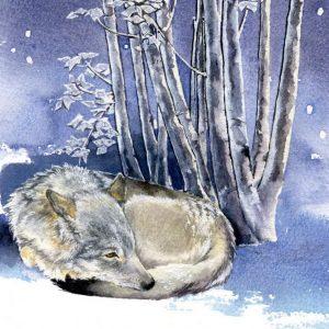 Eurasian Wolf Christmas Cards