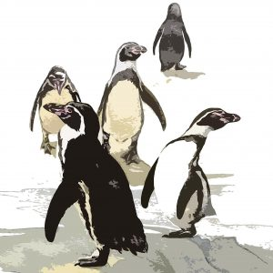 Humboldt Penguins Christmas Cards