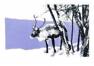 "Kim's Reindeer - 7""x5"" Christmas Cards"