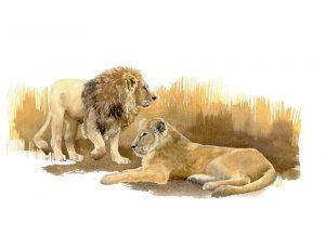 Asiatic Lions - Landscape Blank Card
