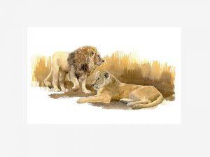 Asiatic Lions - Original Watercolour