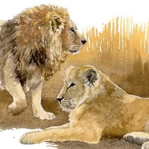 Asiatic Lions - Square Blank Card
