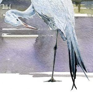 Blue Crane - Square Blank Card