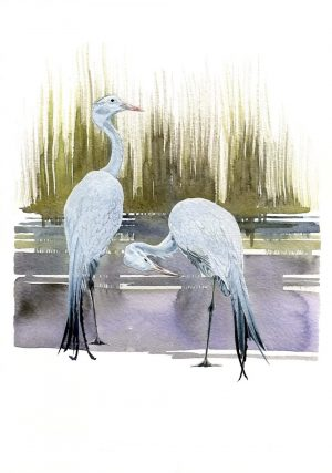 Blue Cranes – Portrait Blank Card