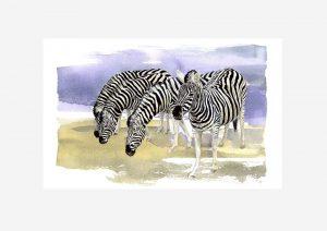 Chapman's Zebras - Original Watercolour