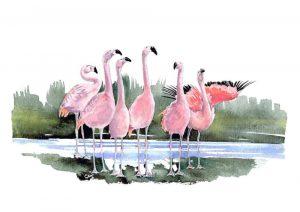Chilean Flamingos – Landscape Blank Card