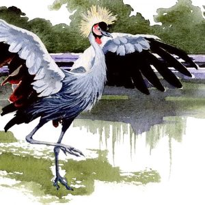 East African Crested Crane - Square Blank Card