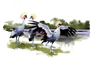 East African Crested Crane - Fine Art Print