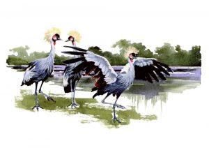 East African Crested Crane – Landscape Blank Card