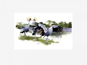 East African Crested Crane - Original Watercolour