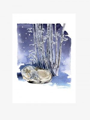 Eurasian Wolf - Original Watercolour