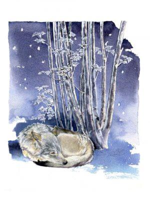 Eurasian Wolf – Portrait Blank Card