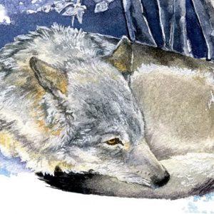 Eurasian Wolf - Square Blank Card