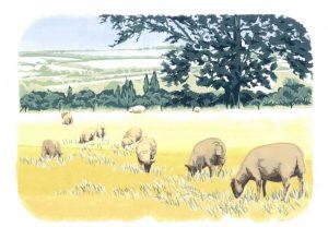 Ewelme Sheep – Landscape Blank Card