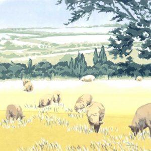 Ewelme Sheep - Square Blank Card