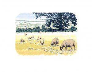 Ewelme Sheep - Studio Print