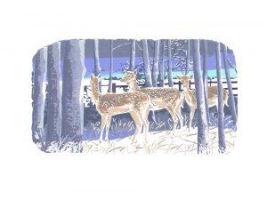 First Winter - Studio Print
