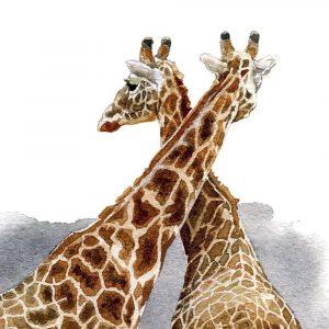 Giraffes - Square Blank Card