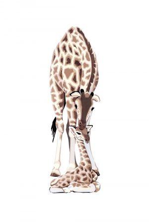 Giraffes - Studio Print
