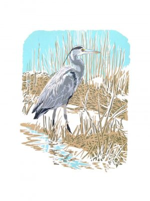 Heron in the Reedbeds - Studio Print
