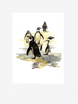 Humboldt Penguins - Original Watercolour