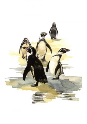Humboldt Penguins - Portrait Blank Card