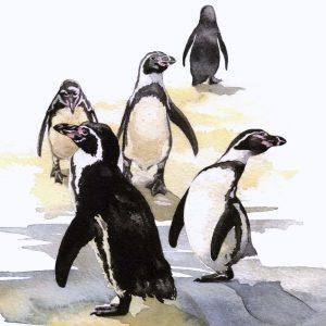 Humboldt Penguins - Square Blank Card