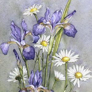 Irises & Oxeye Daisies - Square Blank Card