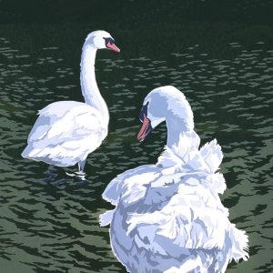Mute Swans - Square Blank Card