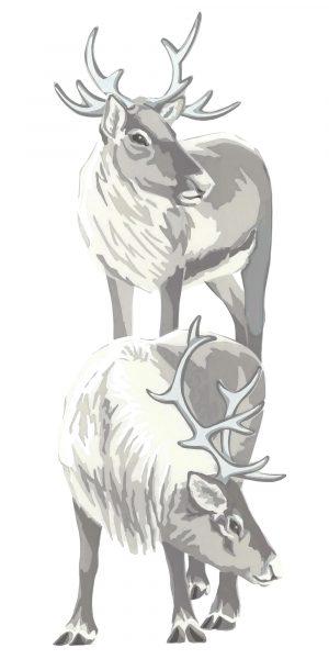 Reindeer - Fine Art Poster