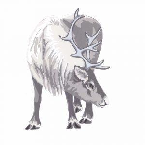 Reindeer - Square Blank Card