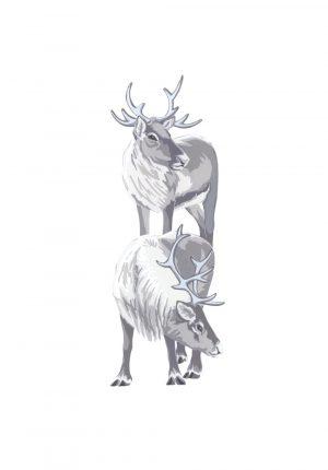 Reindeer - Studio Print