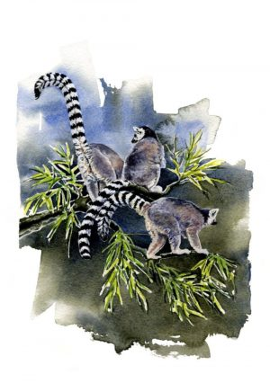 Ring Tailed Lemur Portrait Blank Card