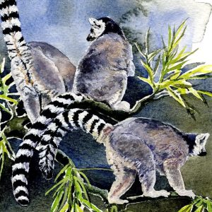 Ring Tailed Lemurs - Square Blank Card