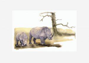 Southern White Rhino - Original Watercolour