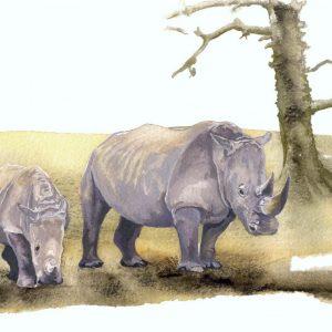 Southern White Rhino - Square Blank Card