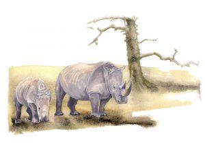 Southern White Rhino – Landscape Blank Card