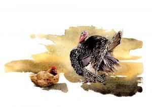 Turkey & Hen – Landscape Blank Card