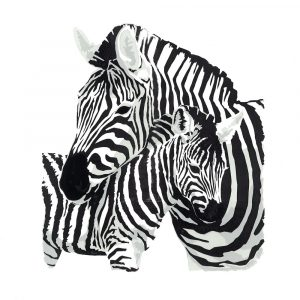 Zebra and Foal - Square Blank Card