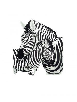 Zebra and Foal - Studio Print