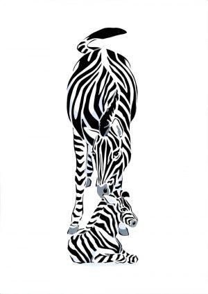 Zebras - Studio Print