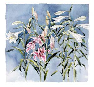 Stargazer Lillies - Original Watercolour