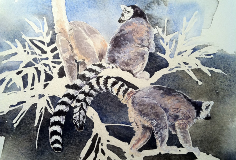 Ring Tailed Lemurs - Watercolour
