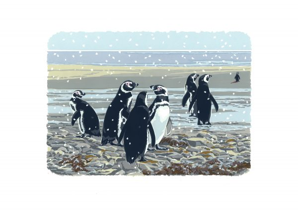 Snowy Magellanics - A3 Landscape Studio Print