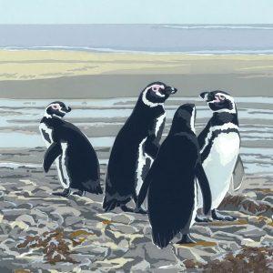 Magellanic Penguins - Square Blank Single Card