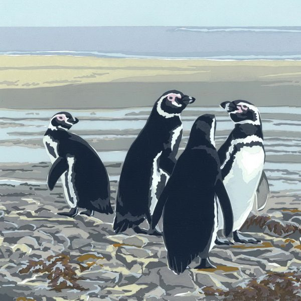 Magellanic Penguins - Square Blank Single Card