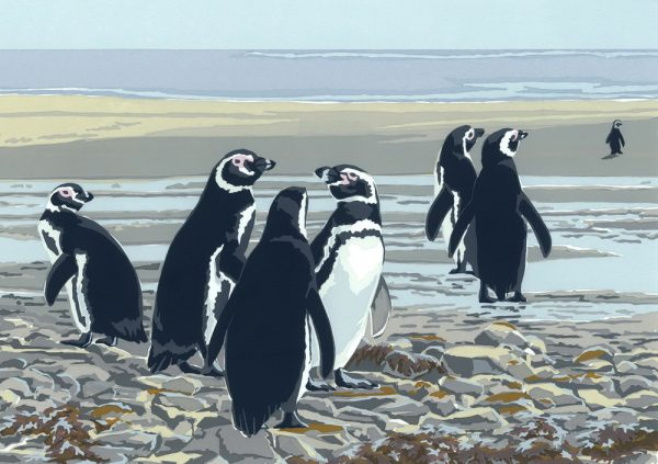 Magellanic Penguins - A5 Blank Single Card