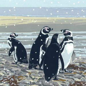 Snowy Magellanics - Pack of 5 Christmas Cards